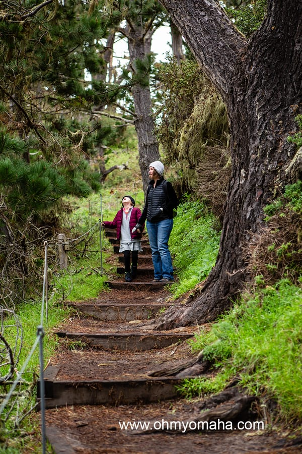 Things to do with kids in Carmel - Hike at Point Lobos State Natural Reserve