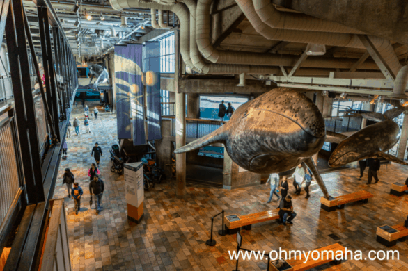 Things to do with kids near Carmel - Visit the Monterey Bay Aquarium