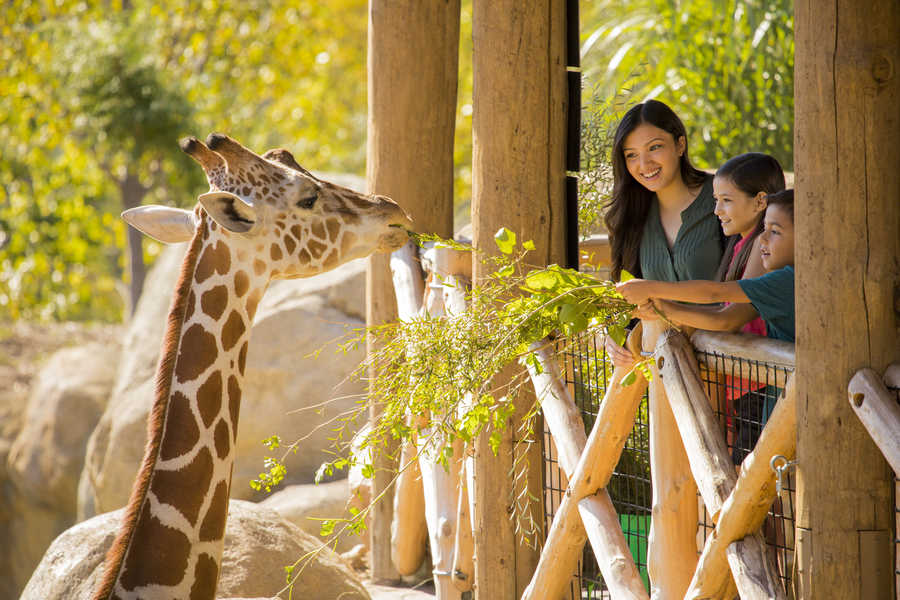 Feeding a giraffe at Omaha's zoo