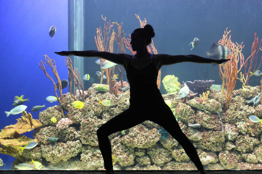 A yogi holding a pose in the aquarium at Omaha's Henry Doorly Zoo & Aquarium