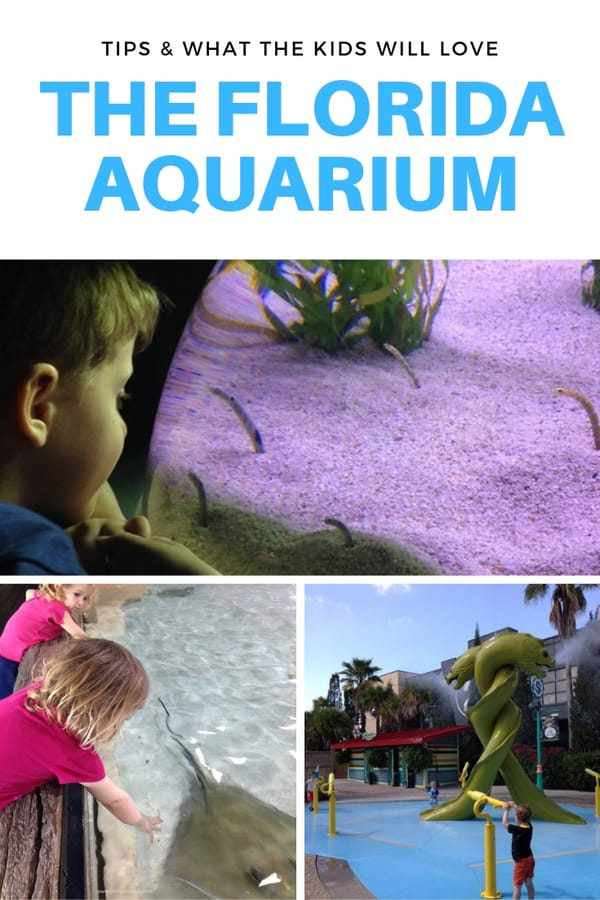 Looking for fun things to do in Tampa, Florida? Don't skip The Florida Aquarium! Here's a look at what kids will like at the aquarium, including the touch tanks and the awesome outdoor splash garden. This guide includes tips on how to save money, when to visit and what to bring. #familytravel #Tampa #Florida