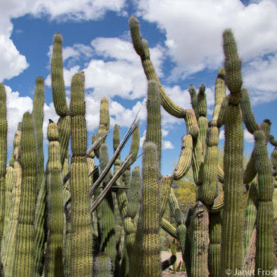Best Things To Do Outdoors In Tucson With Kids