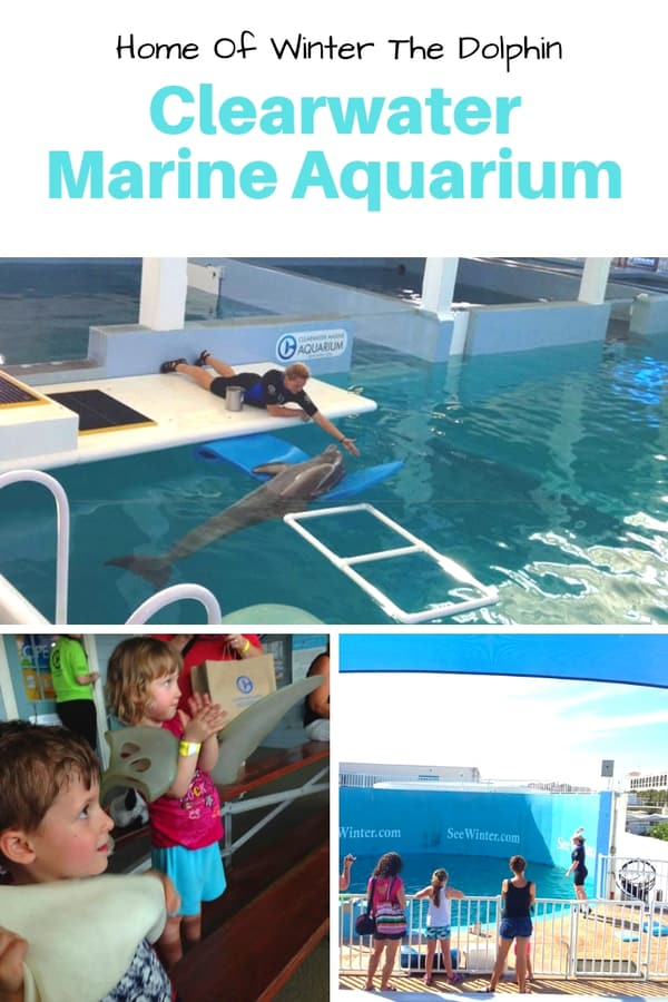 "Visiting the home of Winter the dolphin from ""Dolphin Tale"" - If you're traveling to Clearwater, Florida, plan a trip to visit the Clearwater Marine Aquarium! Read this post to know more about what to expect if you visit this aquarium. #Florida #familytravel #dolphins"