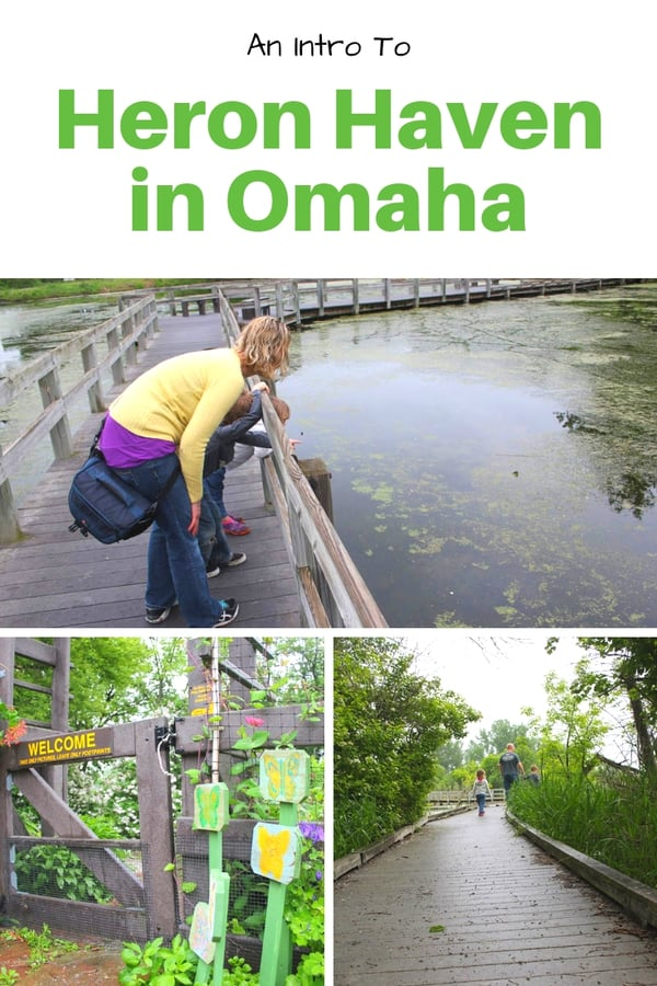 Heron Haven is a hidden gem in the heart of Omaha, Nebraska. Read about this small sanctuary with trails and wildlife viewing. Get tips on what you'll see there, what not to bring, and when to visit for special events. #Omaha #Nebraska #USA #outdoors