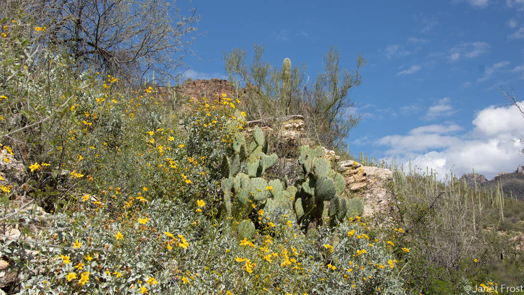 Best things to do outdoors in Tucson with kids - Visit Sabino Canyon Recreation Area for hikes. It's just 10 minutes from downtown Tucson.