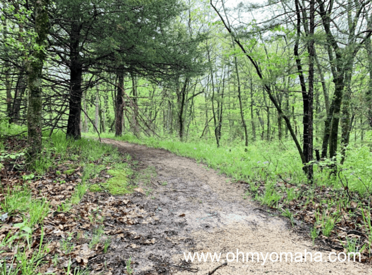 Things to do at Lake Icaria - Hike one of the wooded trails