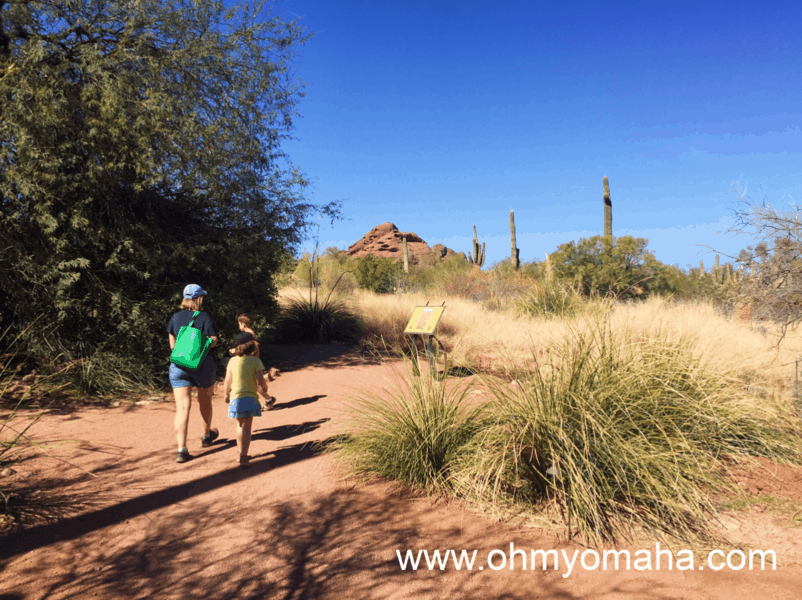 Scottsdale activities for kids - Visit the nearby Desert Botanical Garden and experience the Sonoran Desert. The trails are easy to hike with kids.