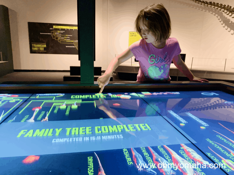 Things kids love about the Tyrannosaurs: Meet The Family exhibit - The interactive family tree is a popular game for kids and even adults.