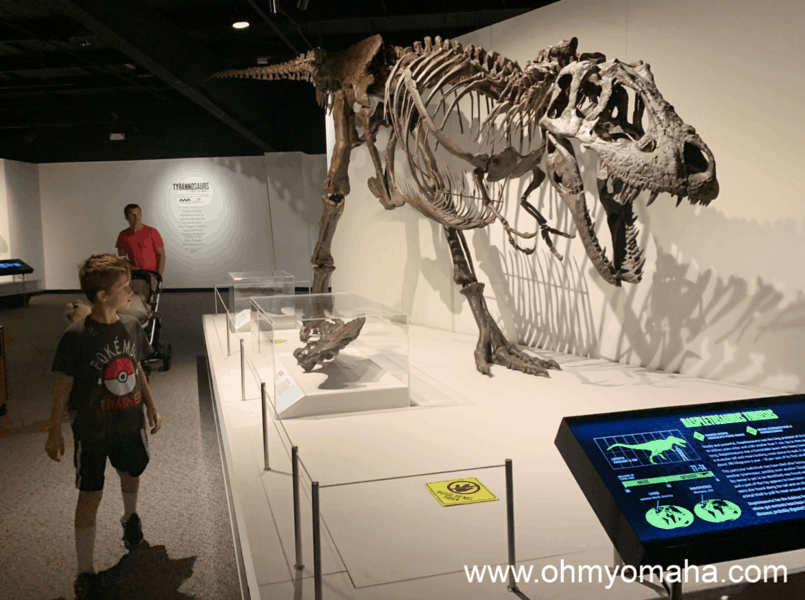 Things to know about The Durham Museum summer exhibit about Tyrannosaurs - The exhibit is a mix of specimens and fossil casts along with interactive screens.