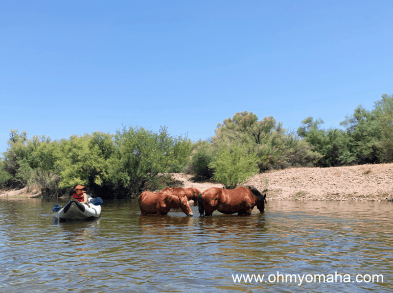 Things to do with kids in Scottsdale - Kayak the Lower Salt River and with some luck, see wild horses