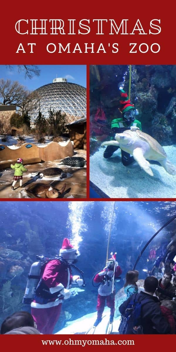 Plan a visit to Omaha's zoo at Christmas time for some special events and holiday character scuba diving! Here's a guide to visiting the zoo in November and December, with the current dates of special holiday meals and chances to meet Santa. #Christmas #Omaha #Nebraska