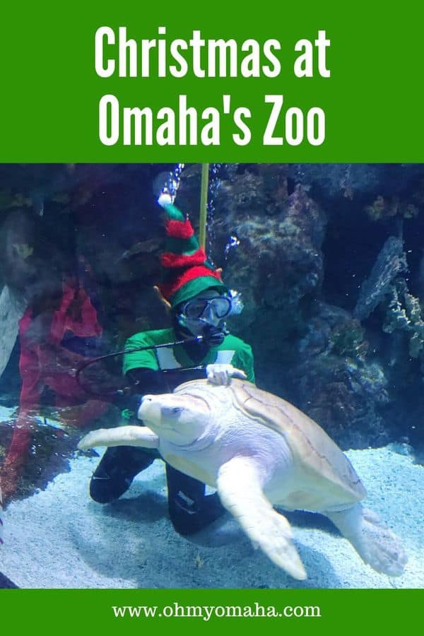 Omaha's Henry Doorly Zoo & Aquarium is the city's most popular tourist attraction. Here's what to expect if you visit the zoo during the holidays - from unique holiday events to Santa scuba diving in a shark tank! #Omaha #Nebraska #OmahaZoo #Holidays #Christmas #Midwest