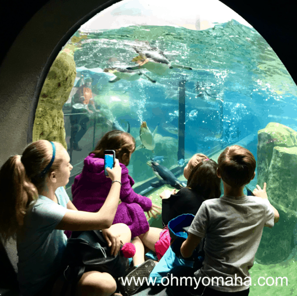 View of the penguins at Omaha's Henry Doorly Zoo & Aqarium.
