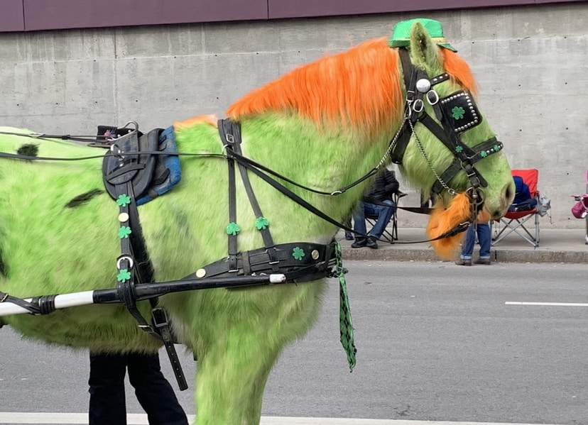 St. Patrick's Day horse