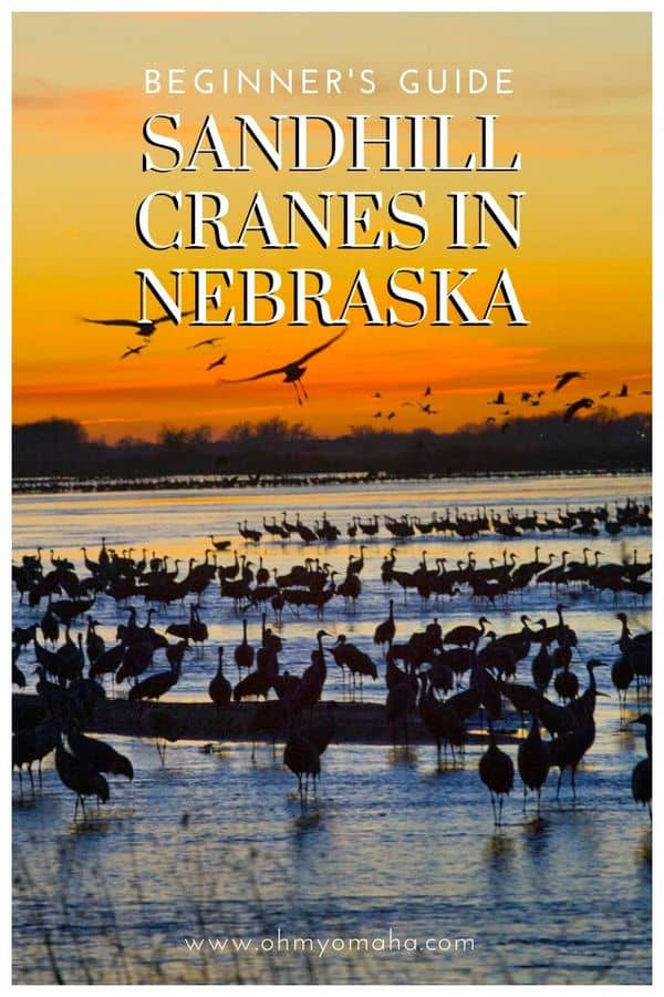 Everything you need to know about the Sandhill Crane migration in Nebraska for 2020 (especially for beginners!) | Where to view the Sandhill Cranes in Nebraska | What events are planned for the Sandhill Crane migration | Best viewing opportunities and tours for bird-watching. #Nebraska #birdwatching #birding #Midwest