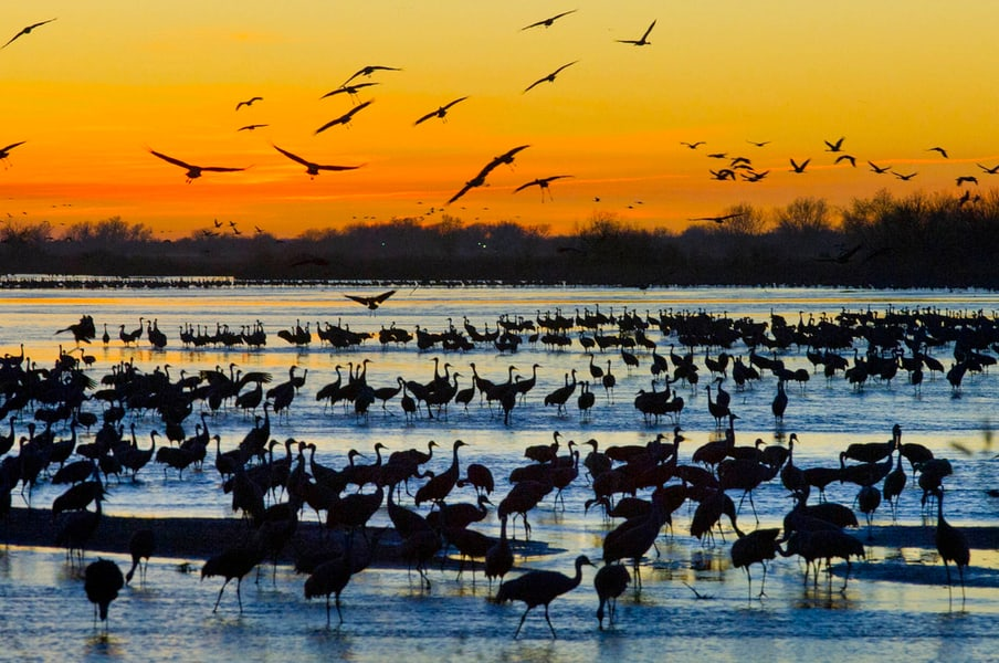 Planning To See The Sandhill Cranes? Here's Where To Stay