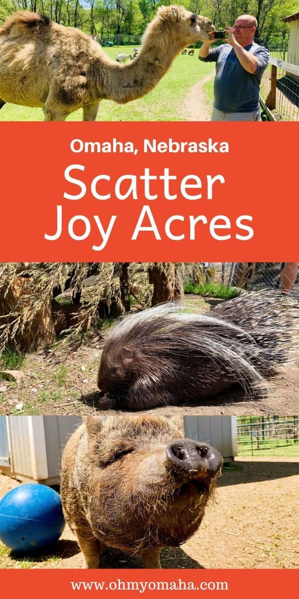 Looking for an off-the-beaten-path fun outing in Omaha? Scatter Joy Acres may be Omaha's best-kept secret. Learn about this petting zoo and working ranch and the rescue animals that live there. #Omaha #Nebraska #FamilyTime #FamilyTravel #FarmLife