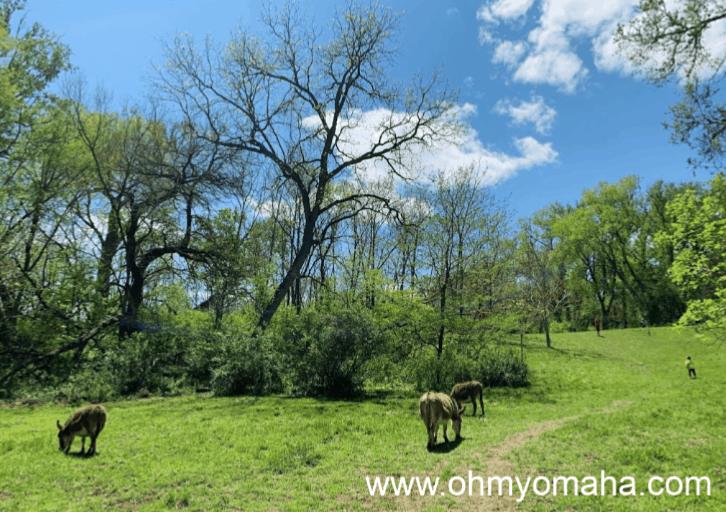 Donkeys at Scatter Joy Acres