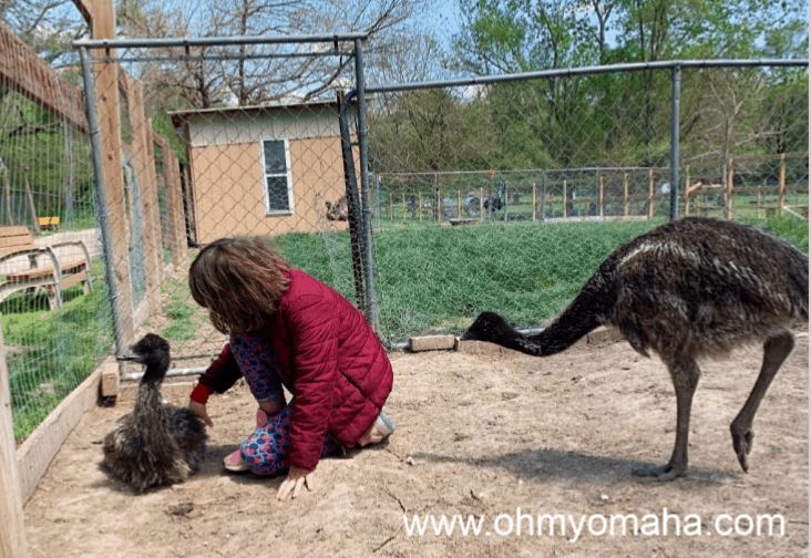 Petting emus at Scatter Joy Acres in Omaha Nebraska