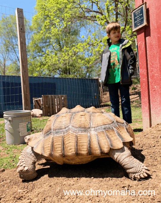 An up-close look at a tortoise at Scatter Joy Acres in Omaha, Nebraska
