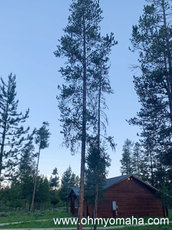 Exterior of a cabin at Headwaters Lodge & Cabins in Grand Teton National Park