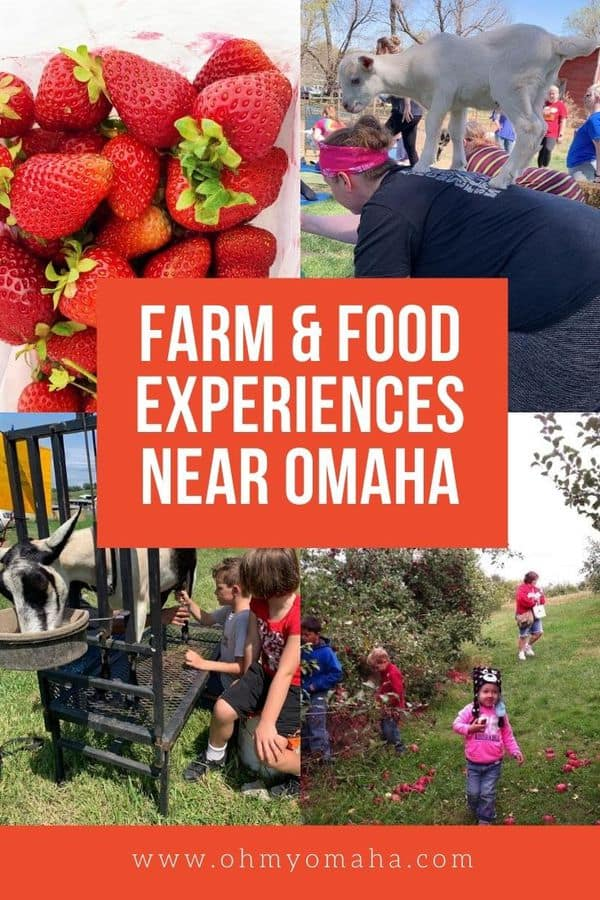 Explore agritourism in Nebraska and Iowa with these farm destinations near Omaha. Farm experiences include farm-to-table dinner, petting zoos, goat yoga, living history farms, u-pick fruits, and more!