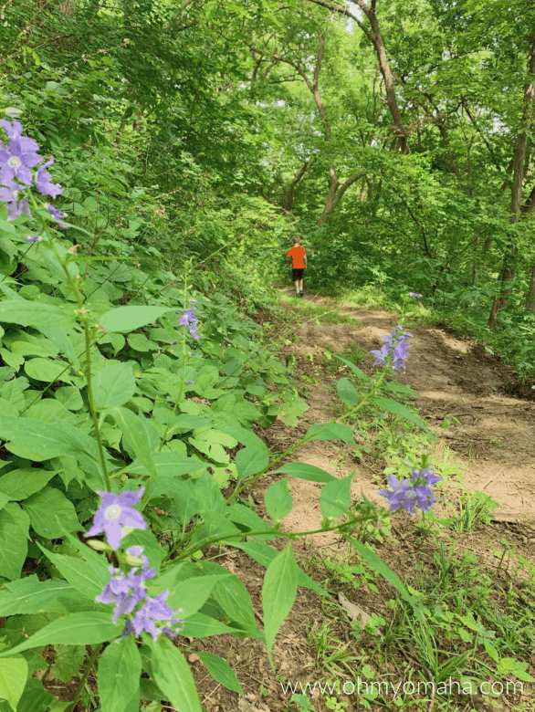 Hiking in the Loess Hills at Waubonsie State Park in Iowa