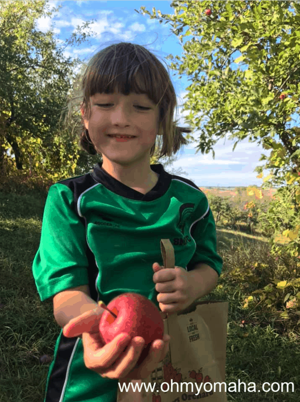 Just-picked red apple at Ditmars Orchard in Iowa
