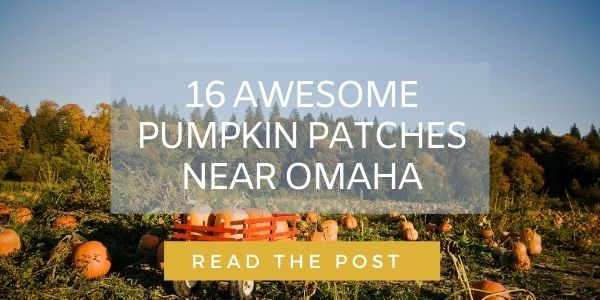 Link to post about Omaha pumpkin patches