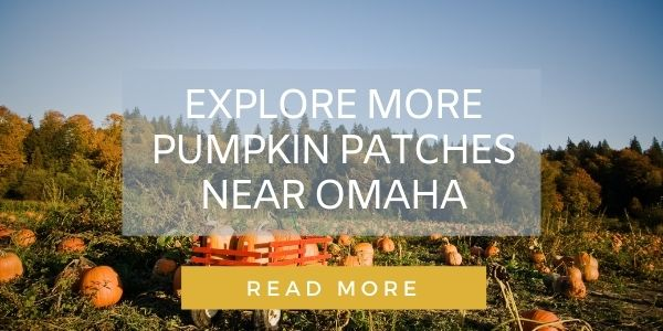 Button to read about Omaha pumpkin patches