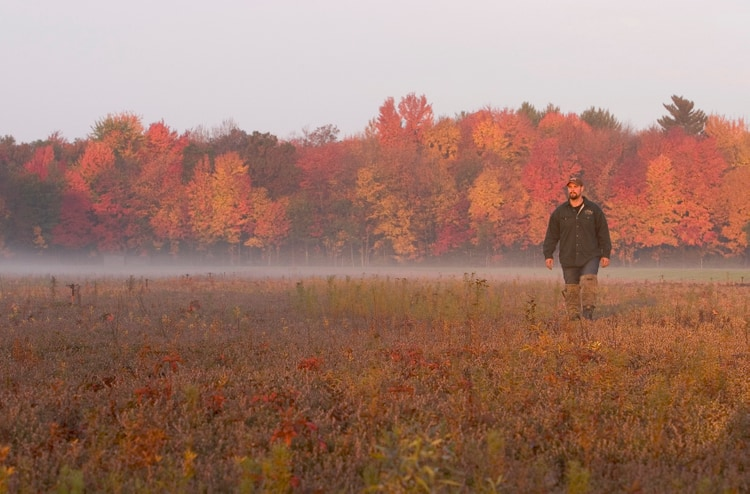 Man walking in a marsh during the Fall Cranberry Festival in Wisconsin