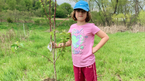 Arbor Day Facts, Events & Printables