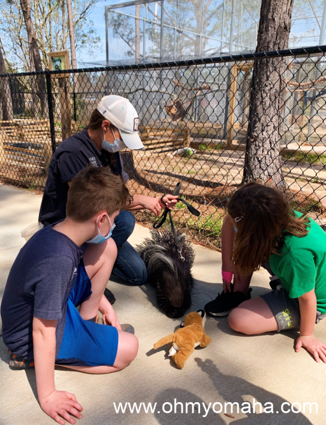 My kids meeting the famous Bruce Quillis porcupine at the Alabama Gulf Shores Zoo.