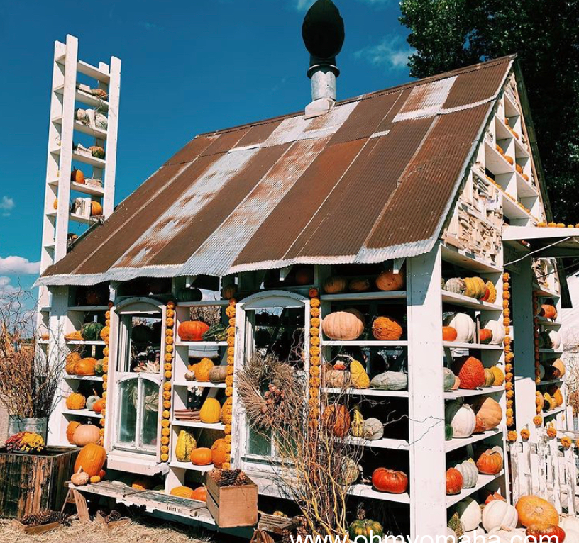 A house of pumpkins makes a good photo app at the 2020 Junkstock held at Sycamore Farms.