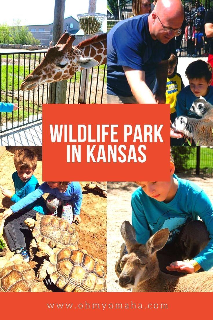 Tanganyika Wildlife Park - What to expect at this wildlife park in Kansas, including close encounters with lemurs and kangaroos #familytravel #Wichita #Kansas