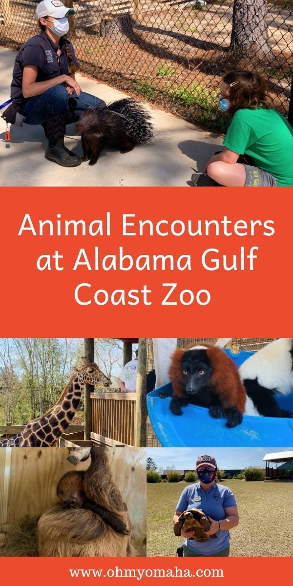 The stories behind some of the quirkiest animals, silliest names, and most amazing animal encounters at Alabama Gulf Coast Zoo.