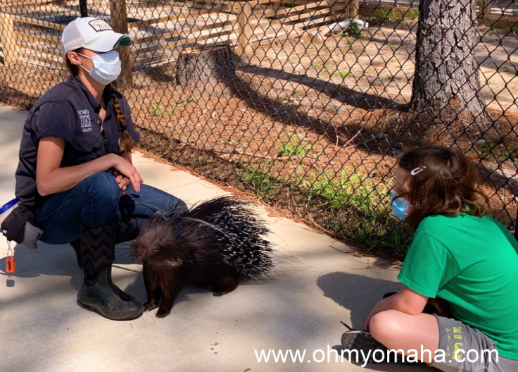 My daughter learning about the African crested porcupine named Bruce Qwillis