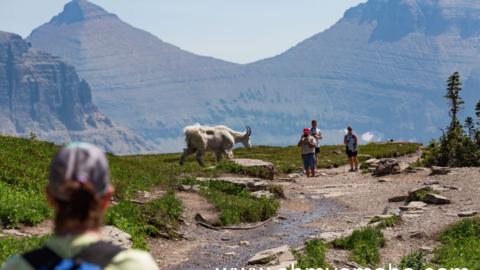 12 Easy Trails At Glacier National Park