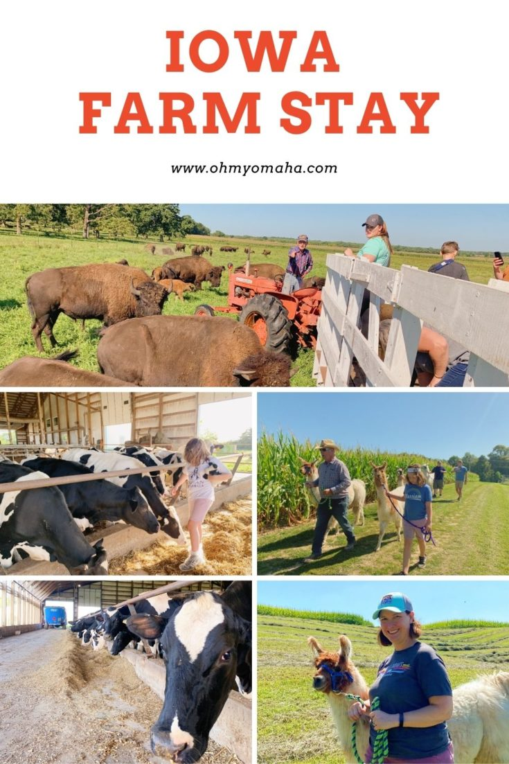 Plan an unforgettable weekend that can only happen in the Midwest - an Iowa farm stay! Find out which dairy farm hosts guests, and where the buffalo ranch and llama farm are to round out the trip.