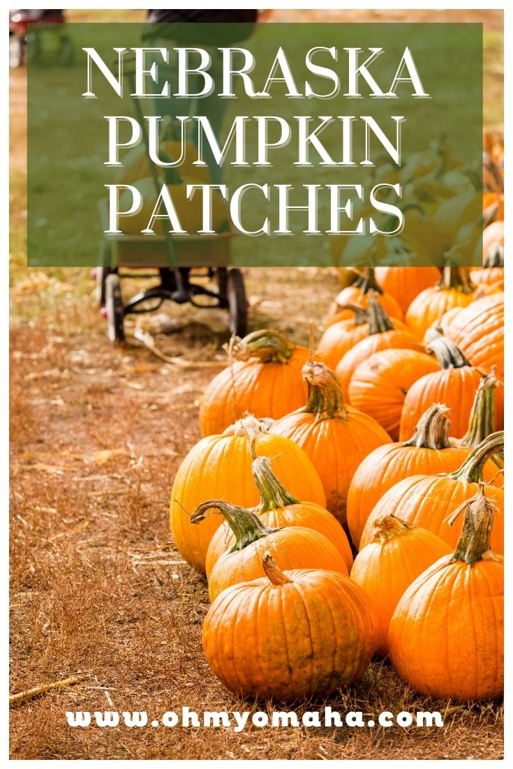 A big list of Nebraska pumpkin patches including large farms near Omaha and Lincoln, and family-friendly farms throughout the entire state. List includes opening dates for 2021, hours, admission cost, and tips on fun things to see and do.