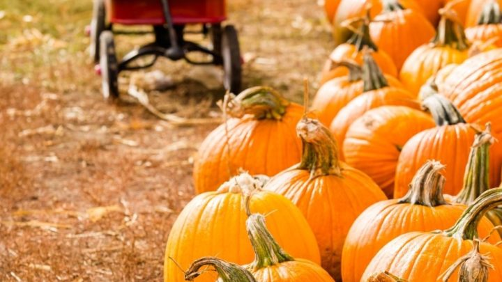 20 Nebraska Pumpkin Patches For Fall Outings